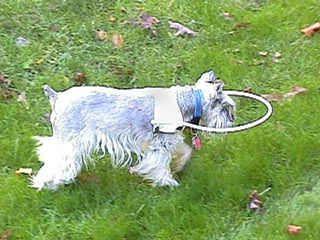 Little Angel Vest For Blind Dogs Dog Stuff Pinterest