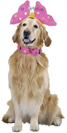 Amazon.com: Pet Butterfly Dog Halloween Costume For Large Dogs: Clothing