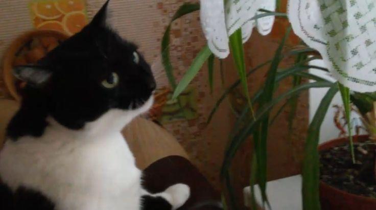 Кошка ест вазоны