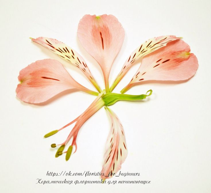 122 best Flower Anatomy✿‿ images by Beata Andrianova on Pinterest ...