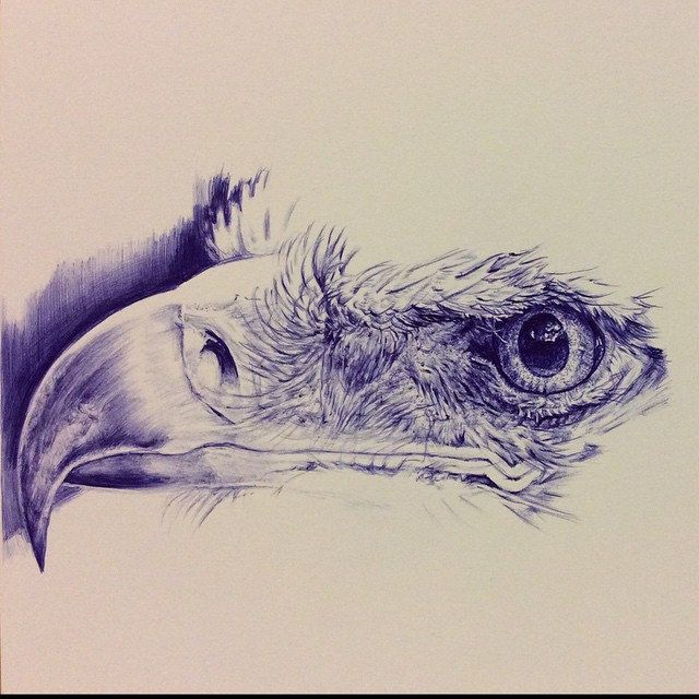 Work in progress. Ballpoint pen drawing of an eagle drawn freehand ...