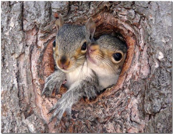 animal love Beautiful