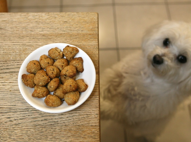 Homemade doggie treats!