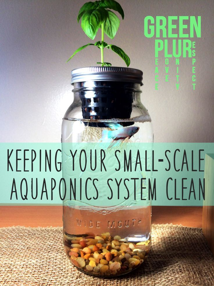 How to keep your small-scale aquaponics system clean :) Green PLUR. Check it out~ Mason Jar Aquaponics, Sustainability