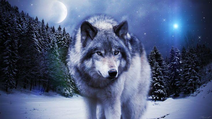 1080P Wolf Wallpaper