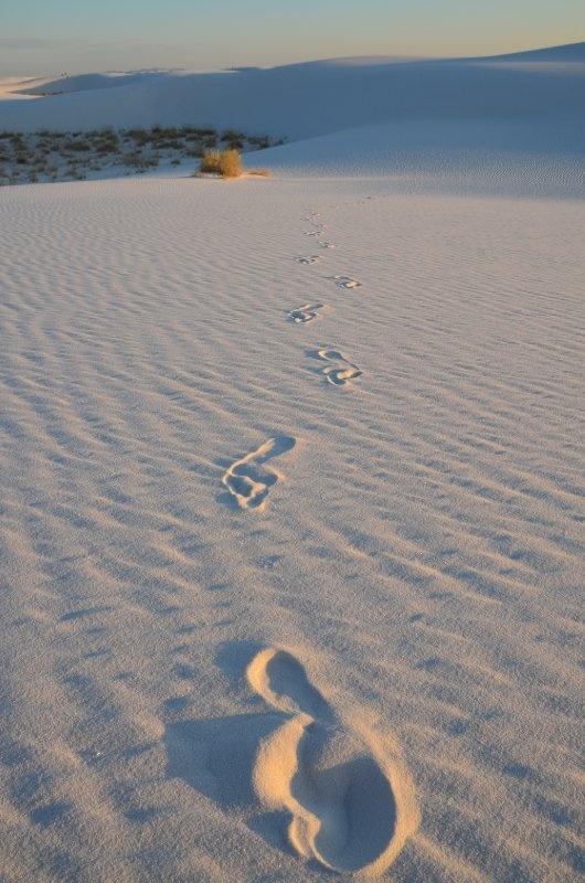 ホワイトサンズ( White Sands)  国定公園へ指定されている白い砂漠  白い砂漠にはブリーチト・イアレス・リザードなど真っ白いトカゲが白い砂丘と同化する様に生息する。白い砂丘では世界最大級の面積のようです。  ホワイトサンズにはミサイル基地があり入れない場所もあるという。    地図:  https://maps.google.co.jp/maps?q=White+Sands%E3%80%80=f=chrome,mod%3D9=1=UTF-8=ja=N=wl