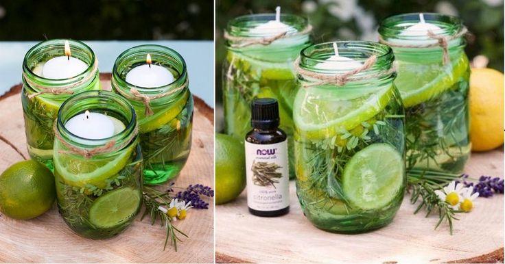Chassez les moustiques avec du citron et des herbes fraîches, tout en décorant…