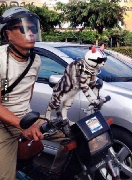 This cat is cooler than you. Deal with it.
