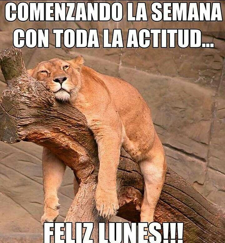 Ja Ja Y Con Lluvia Tras Lluvia Frases Graciosas De Buenos Dias Imagenes Chistosas Para Whatsapp Buenos Dias Divertido