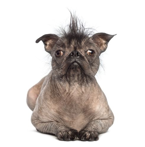 http://dog-breeds.findthebest.com/stories/3572/ugliest-dogs-world Evolution dictates that there will be some dog breeds that won't quite make the cute quota. After all, without ugly dogs, we would never be able to distinguish—let alone appreciate— the adorable ones,,,