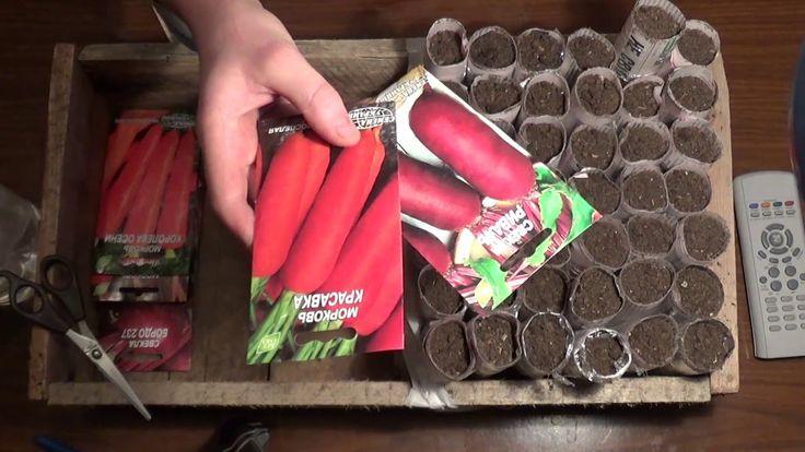 Посадка моркови и свеклы на рассаду. Planting carrots and beet seedlings.