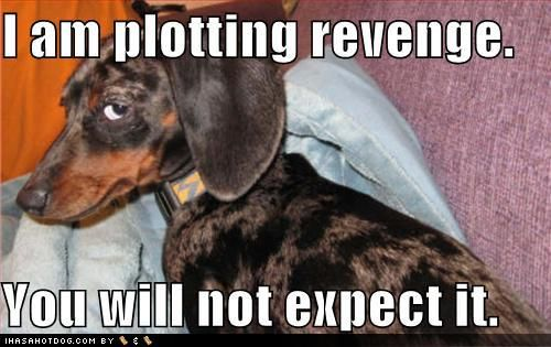 Dachshund i use to have a dog that looked just like this except he had one blue eye and one brown eye and he would give you this same look with his blue eye