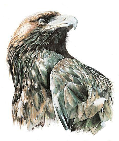 Wedge Tail Eagle by ZiyaEris #AnimalArt #Art #Drawing #Bird