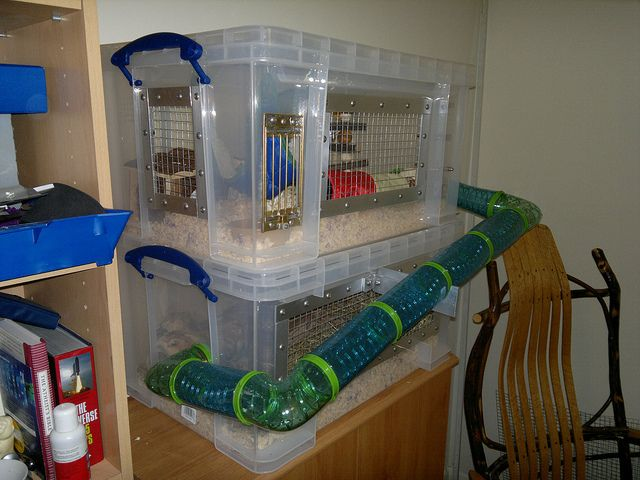 1000 images about hamsters on pinterest maze homemade for Diy hamster bin cage