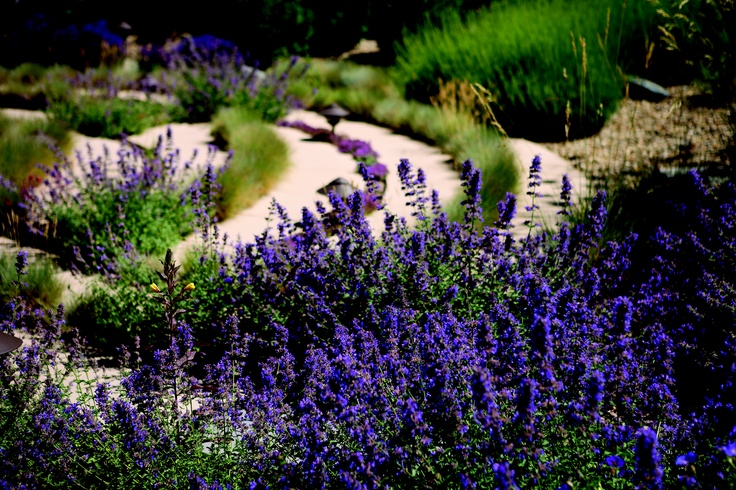 17 best images about healing gardens on pinterest gardens green roofs and medical center for Gardens regional hospital and medical center