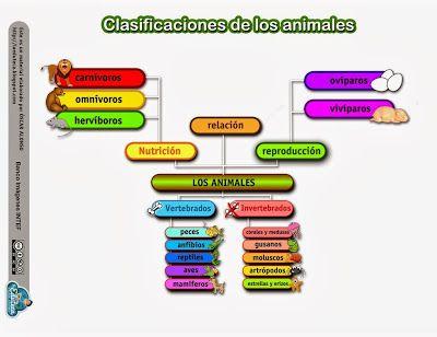 Clasificaciones de los Animales