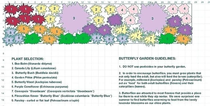 Perennial Garden Plans For Zone 6 Google Search Butterfly