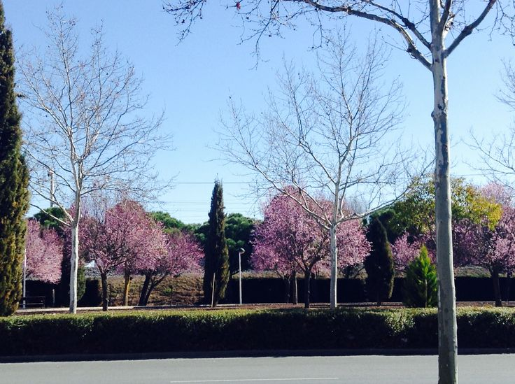 #ciudadreal  #españa #rosa #remeber