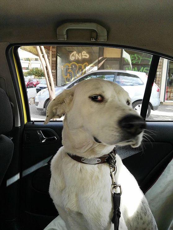 i pet taxi μεταφορά κατοικίδιων ζώων φθηνά με κανονικές τιμές ταξί