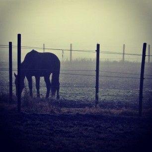 Horse in the fog, Ski, Norway.