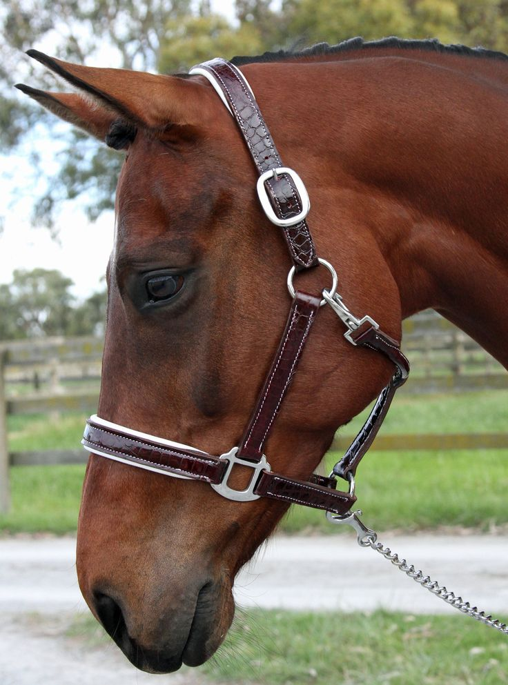 Burgundy Crocodile Print Patent Leather Halter - Halters & Leads | Flexible Fit Equestrian