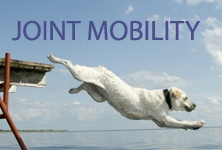 Feed your dog Fishh4Dogs and See the Difference in Joint Mobility.