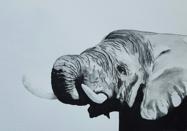 Elephant black and white 2 Artist Lorna Pauls  Watercolors on 300g Bockingford watercolour paper 1/4 sheet Done February 2017