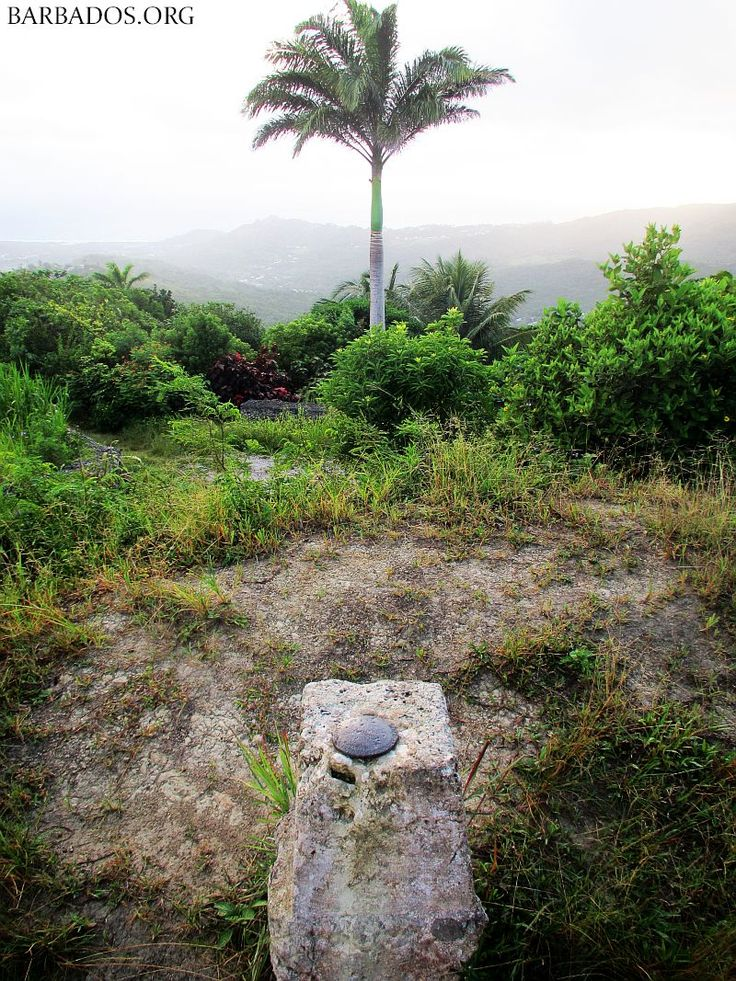 Visit Mount Hillaby , the highest point in #Barbados for stunning views!