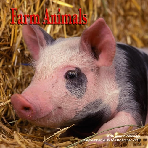 Buy Farm Animals 2013 Calendar online at Megacalendars This calendar is multi lingual with the month of the year and day of the week in six languages English French German Italian Spanish and Portuguese .  http://www.megacalendars.com/Farm-Animals-2013-Calendar-MGANM05_p_13700.html