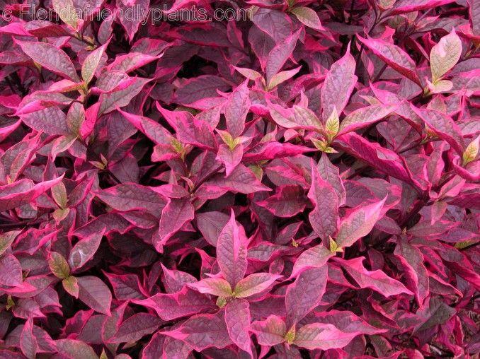 Riverview Flower Farm S Florida Friendly Plants