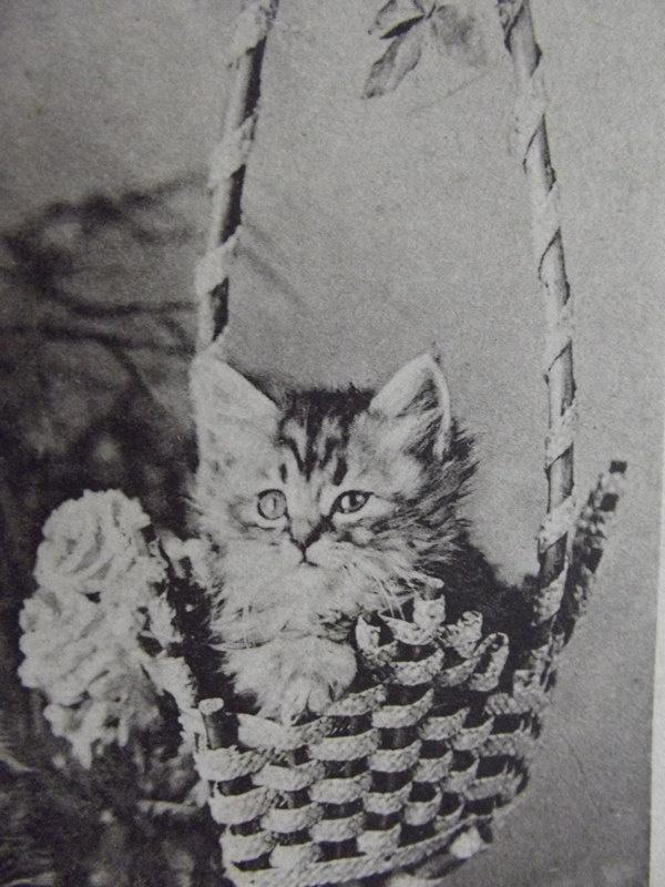 .: Vintage Postcards, Cat, Lots, Black And White, 2012, Secret