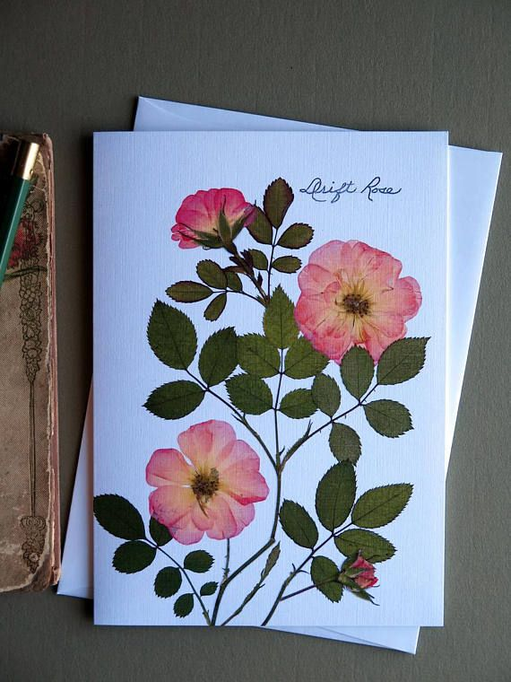 Drift Rose Flowers Card With Roses Pressed Flowers Etsy Pressed Flower Crafts Pressed Flowers Diy Pressed Flower Art