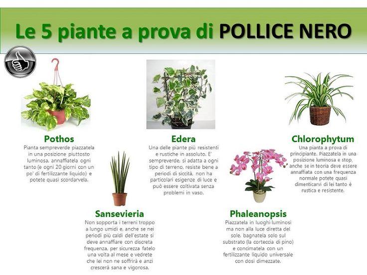 Le piante a prova di pollice nero - Cristalfarma