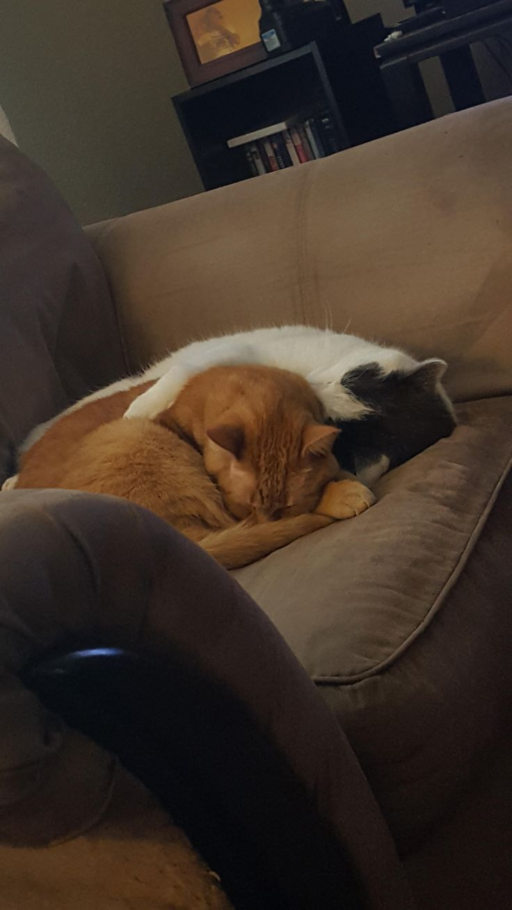 They love each other! http://ift.tt/2o0uTbs