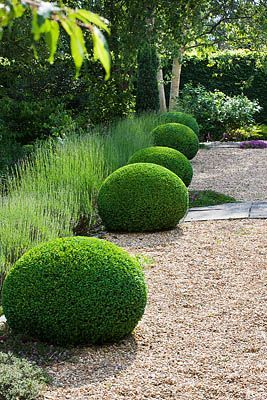 Clive Nichols // the neat thing here is the contrast between the severely pruned shrubs and the rough visual texture of the heather (or grass) behind it.
