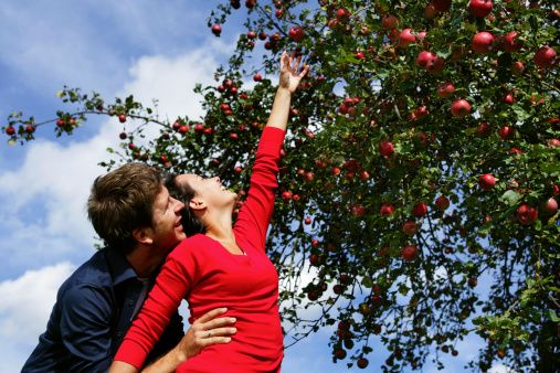 Stock Photo : Couple under an apple tree, woman reaching for an apple, Styria, Austria