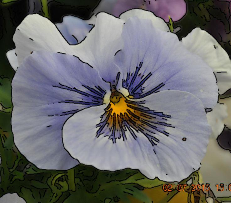 Contoured violet