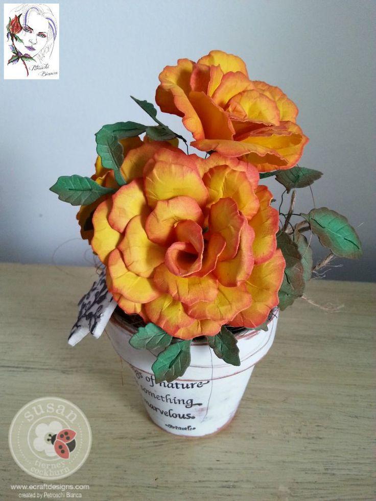 Petroschi-Trandafir (3)