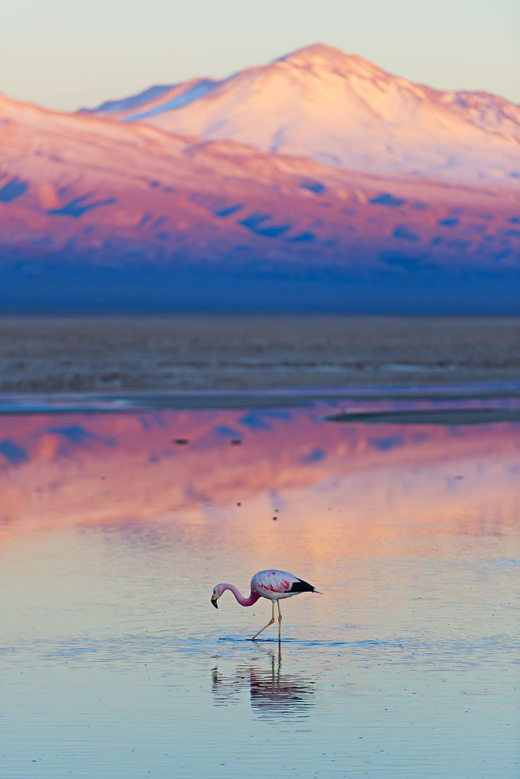 Sunset at Atacama dessert, in #Chile is about shades of pink. Discover these landscapes with a cheap flight.