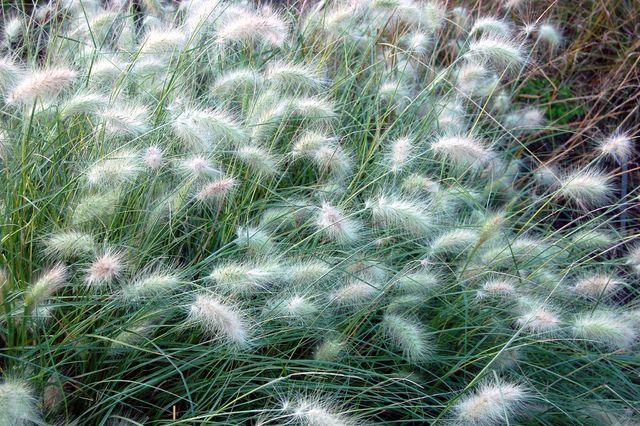 95 best plants for sun images on pinterest front gardens - Jardin de graminees photos ...