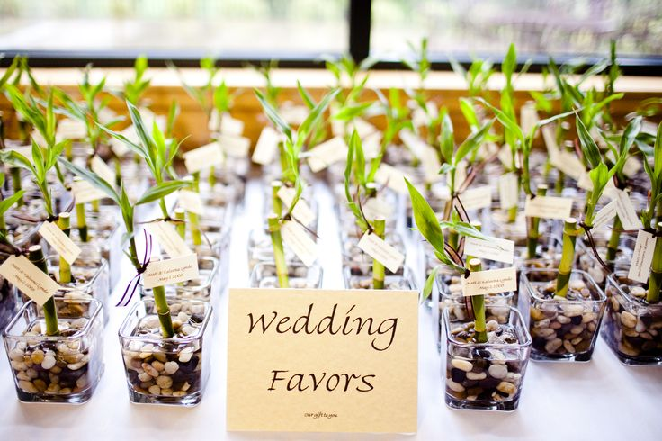 Wedding favors, I got box's of 10 square vases for 5 dollars a box, and rocks to fill the vases (dollar store) then ordered 150 lucky bamboo stocks online (40 dollars for 150) then cut little tags out of fabric paper that had our names and date of our wedding and attached it with ribbon. inexpensive favor that will last forever.