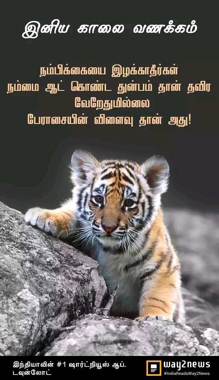 Pin by Lavanya on Tamil quotes Animals