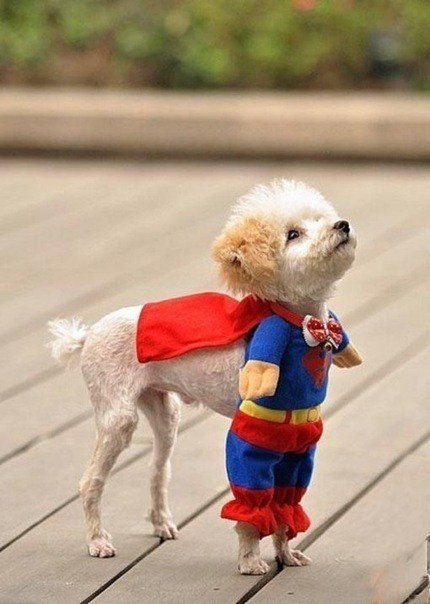If I had a small dog and if I dared to dress it up I would.