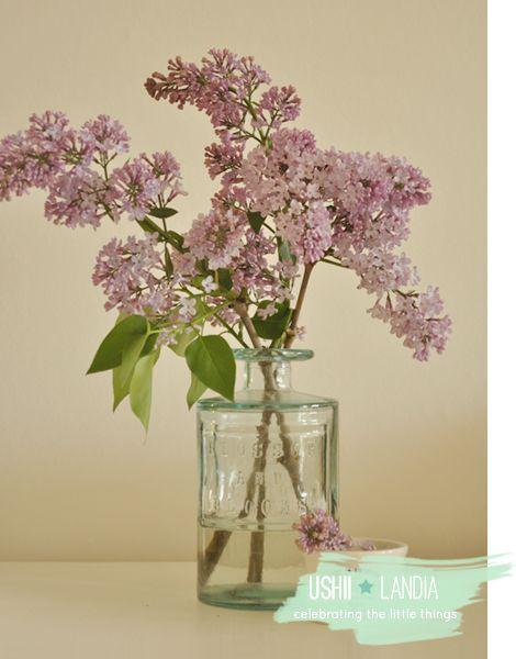 www.ushiilandia.blogspot.com Spoko loko, u mnie znów romantycznie :) I słodko, po holendersku!