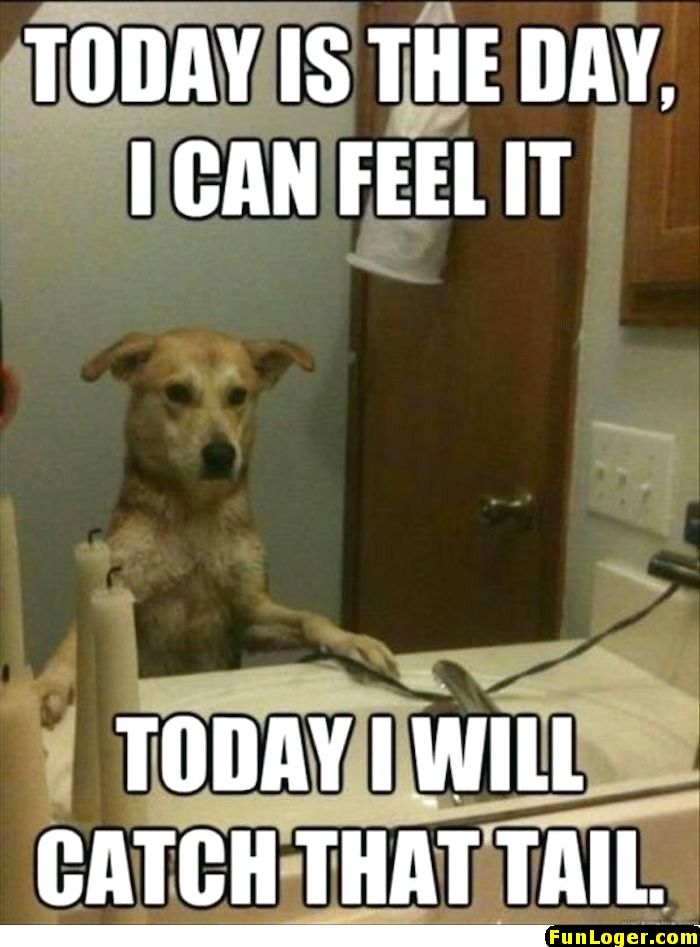 10 Funny Pictures Of Today Dog Quotes Funny Funny Animal Memes Funny Dog Memes