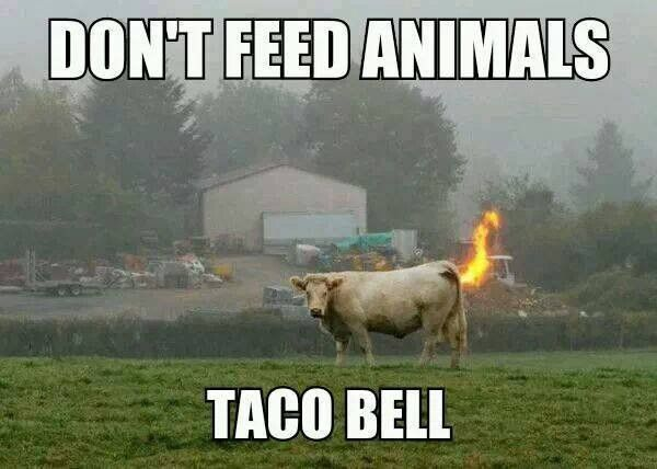 Dont feed animals taco bell - meme