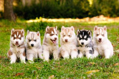 OH MY GOSH. i want all of these.