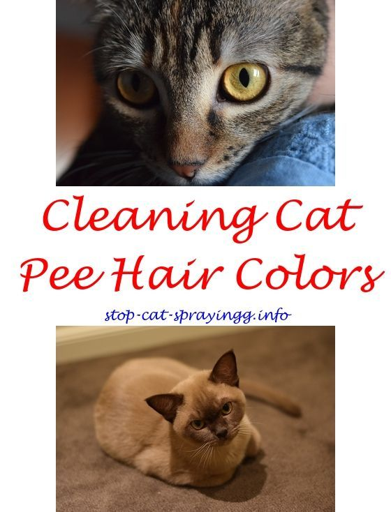Your Sensitive Cat And Litter Box Problems In 2020 Cat Spray