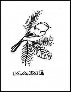 maine state bird and flower coloring pages | 62 best images about All Aboard: Maine on Pinterest ...