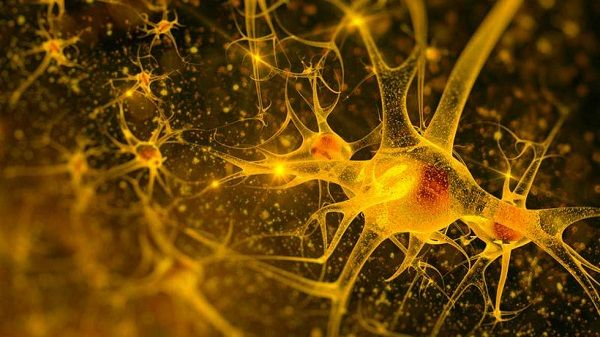 Neuronas controla la insulina que libera el páncreas